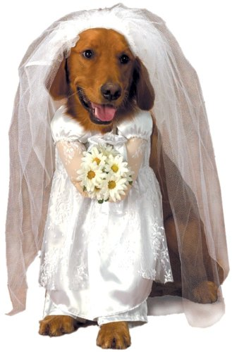 Dogs In Wedding Dresses - Overlay Wedding Dresses